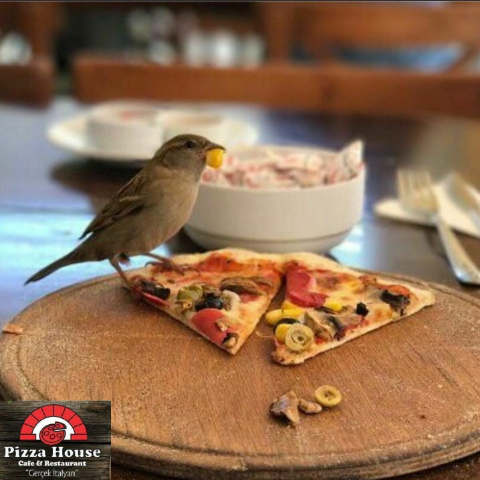 Pizza House & Cafe fotoğrafı